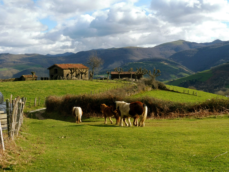 Walking in the Pyrenees with local horses