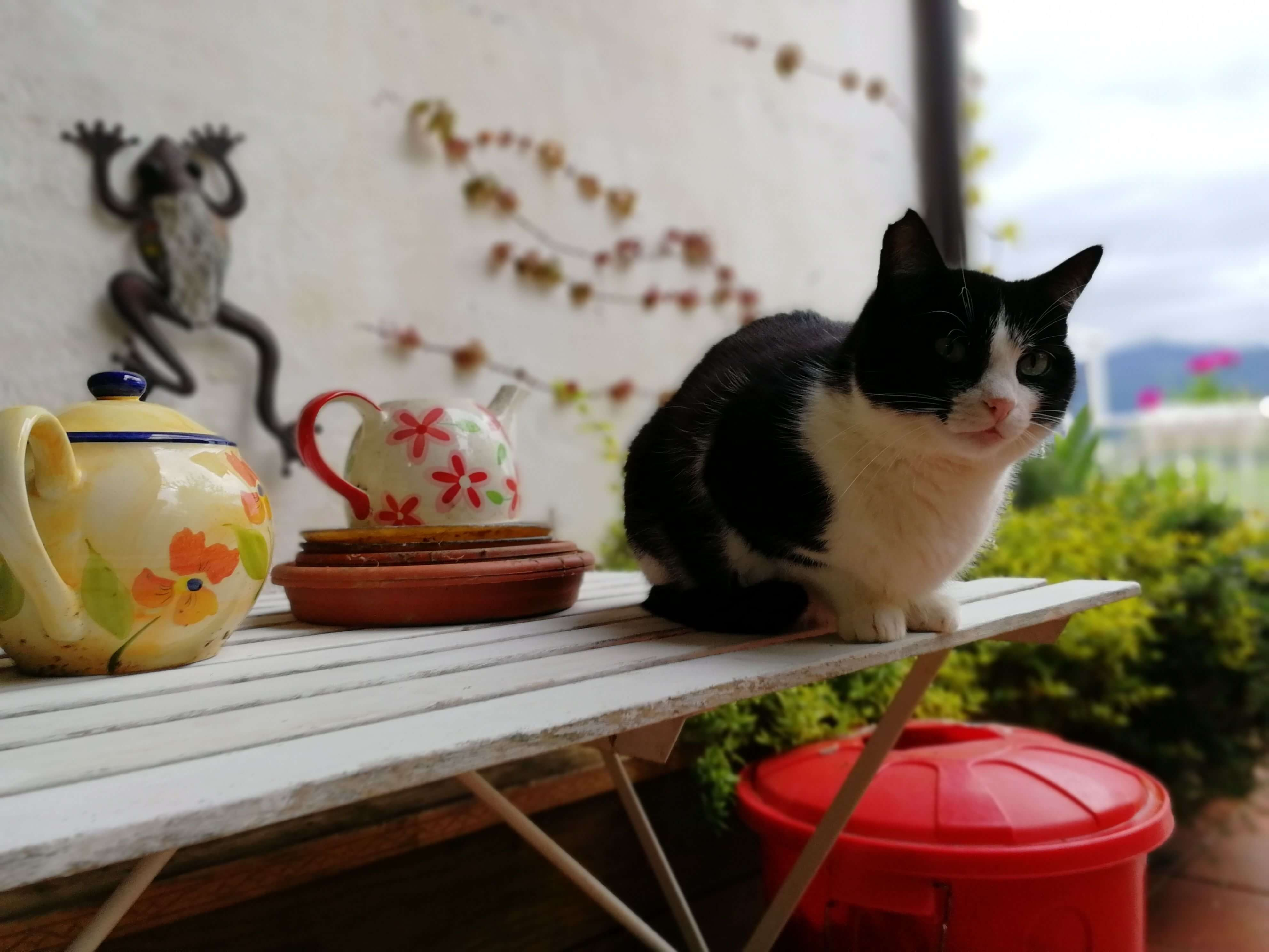 pyreneanexperience-cat-at-our-farmhouse-in-the-pyrenees