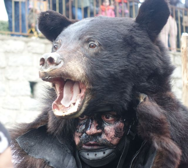 A man dressed as a bear in a fiesta in St Laurent de Cerdans