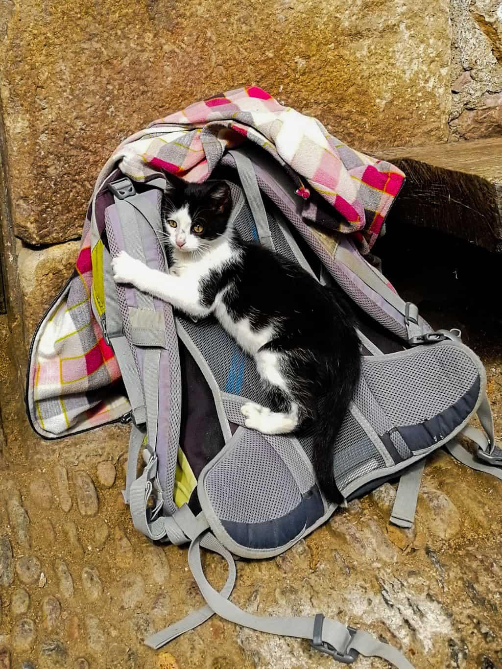 kitten hitching lift on rucksack